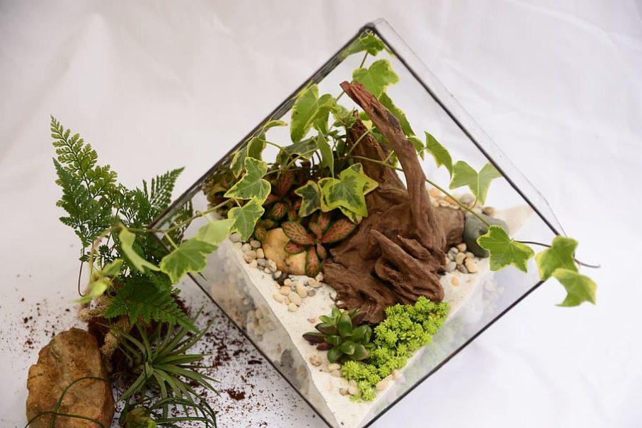 Design Your Own Terrace Workshop vs. Terrarium Workshop – Which One's Better?